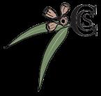 Castlecrag Conservation Society